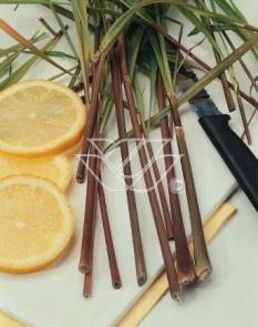 Trawa cytrynowa (Lemongrass) <div class='lat'> Cymbopogon citratus </div>