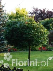 Efektowny soliter jest zwieńczeniem pięknego trawnika