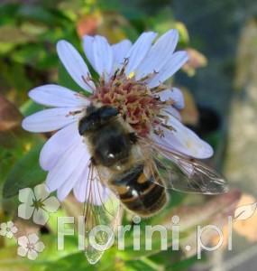 Nasz ogród to miejsce pożywienia owadów