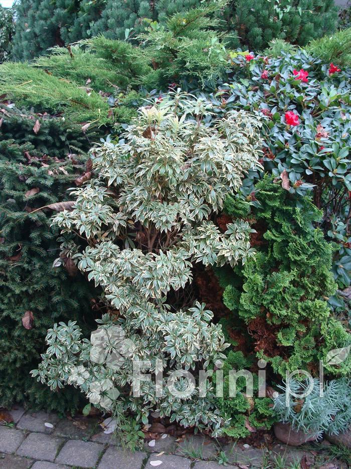 Zima Na Naszym Balkonie Blog Ogrodniczy Porady I