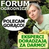 Zapraszamy na dyżur eksperta Florini.pl w dniach 7-13 marca