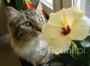 Koty uwielbiają zapach niektórych roślin