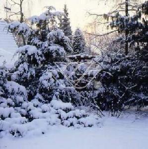 Śnieg jest świetnym naturalnym okryciem roślin