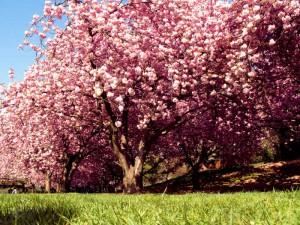 Trawnik pod drzewem