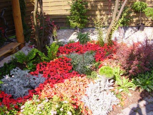 Niecierpki na cienistej rabacie w naszym ogrodzie