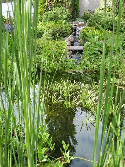 Pamiętajmy o zabezpieczeniu roślin wodnych przed zimą