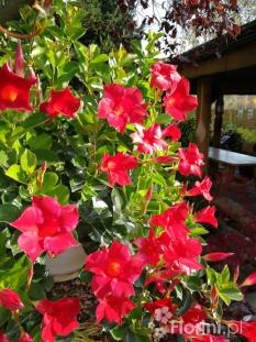 Internetowy Sklep Ogrodniczy Byliny Rośliny I Kwiaty Do Ogrodu